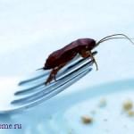 Народные советы: как избавиться от тараканов