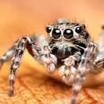 Совет, как избавиться от пауков в квартире
