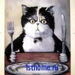 Совет: как отучить кошку кушать со стола