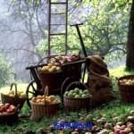 Совет: как увеличить урожай в 3 раза