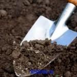 Совет: готовим кислые почвы для посадки