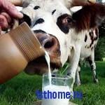 Совет о пользе молока для кухни