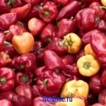 Совет: как хранить сладкий перец