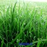 Совет: удаляем пятна от травы