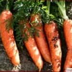 Как сажать весной морковку