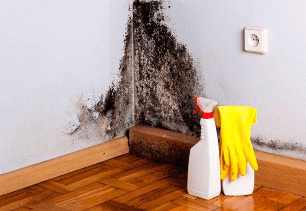 Как вывести грибок в доме натуральными средствами