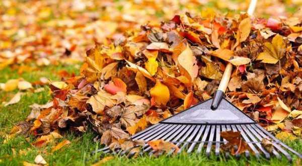 Опавшие листья на даче: лучшие варианты использования природного