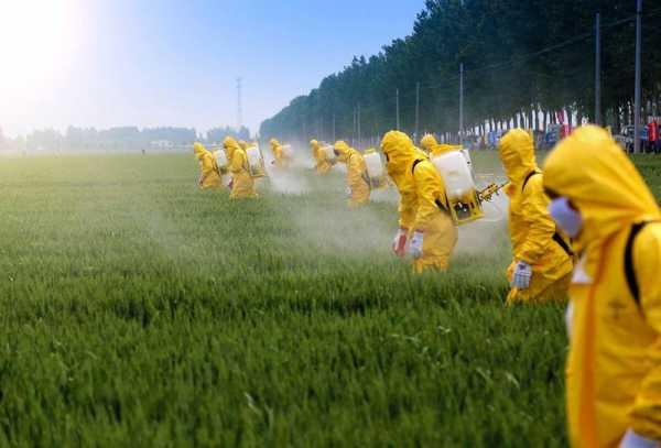 ГМО и глифосат разрушительно влияют на биологию почвы