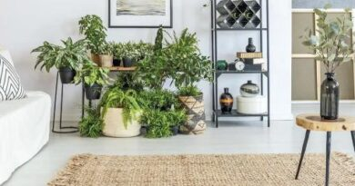 Как красиво расставить комнатные цветы в квартире. Озеленение квартиры